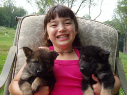 German Shepherd puppies, Chapel Hill NC
